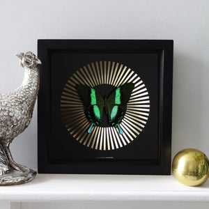 DECO BLAZE Green Swallowtail: gold/ black