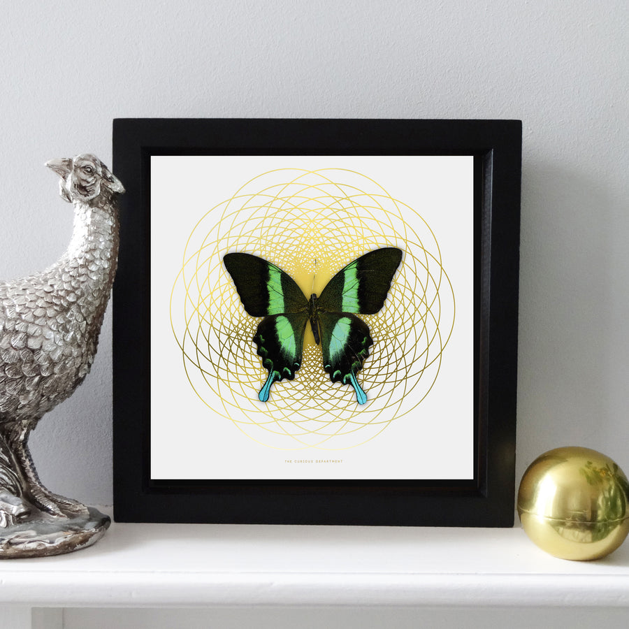 SPIRO Green Swallowtail: gold/ white