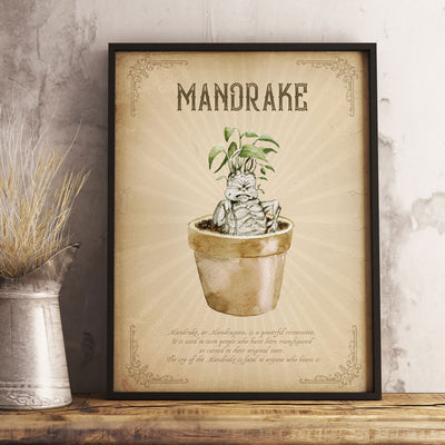 Mandrake Harry Potter