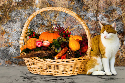 cat with basket