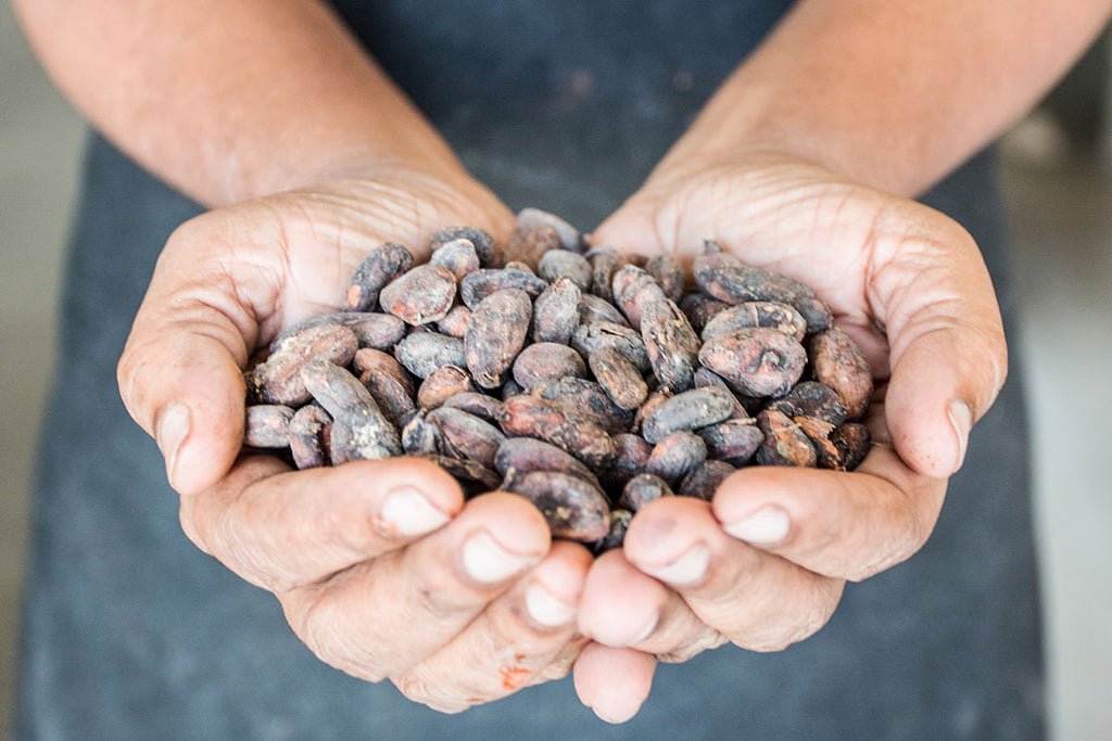 Cocoacraft cacao beans