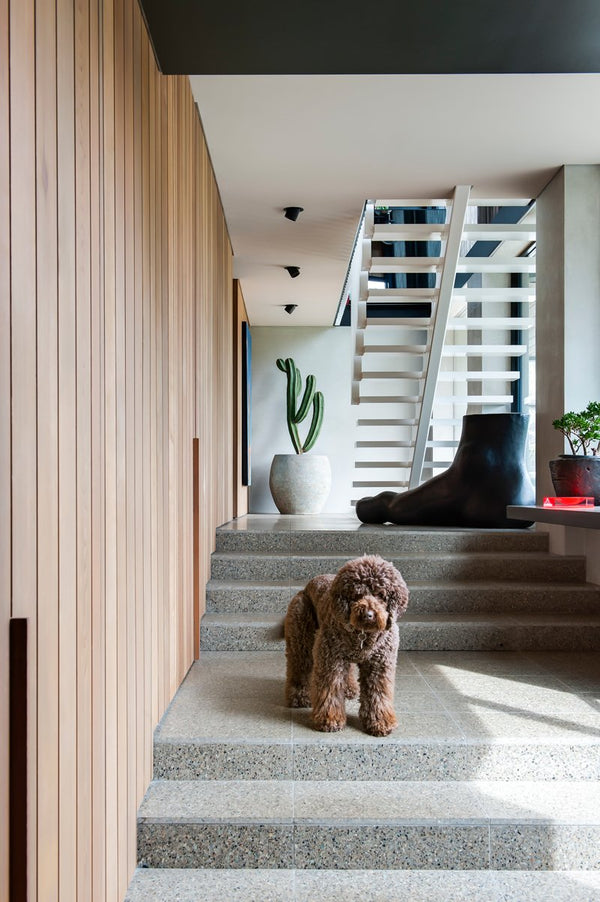 RESIDENT DOG: INCREDIBLE HOMES AND THE DOGS WHO LIVE THERE - Stock & Pantry
