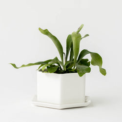 HANDMADE HEXAGON PLANTER - Stock & Pantry