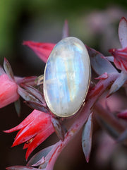 Oval Moonstone Ring 1