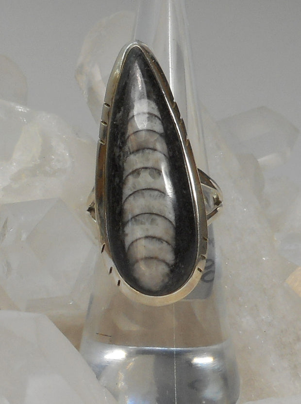 Orthoceras Fossil Ring 1