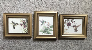 Hummingbird prints in gold 4x5 frames
