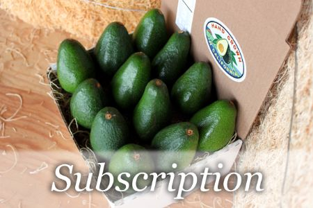 Avocados - Monthly Subscription of 12 Large Avocados