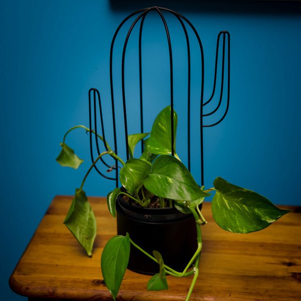 Cactus Shaped Plant Stand