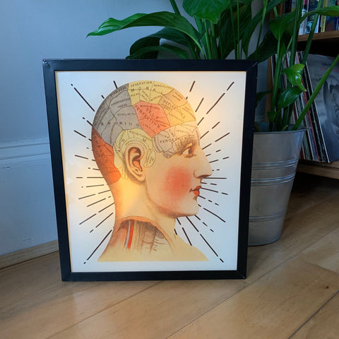 PHRENOLOGY Illuminated LightBox