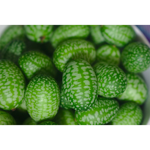 Cucamelon or also tiny watermelons