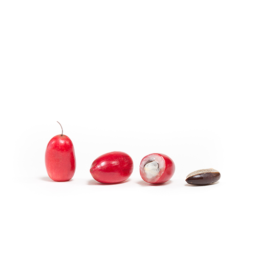 On the left, miracle fruit vertically, miracle fruit laying horizontally, miracle fruit cut in hald with seed, miracle fruit seed