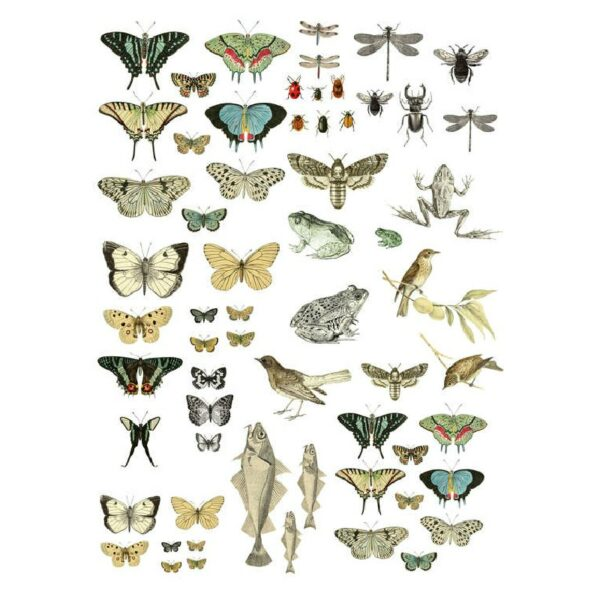 IOD Full Colour Transfer - Entomology Etcetera