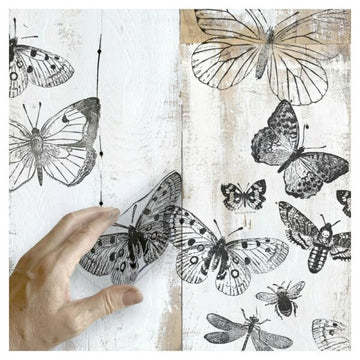 IOD Clear Stamps – Butterflies – Iron Orchid Designs