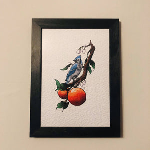 Blue jay A4 Print by Kevin McNulty - 7th Circle Store - Art Print - 7th Circle Store