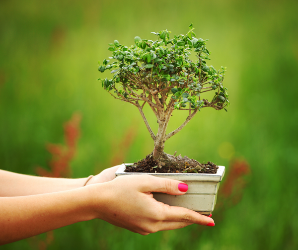 Article: How to choose your bonsai plant?