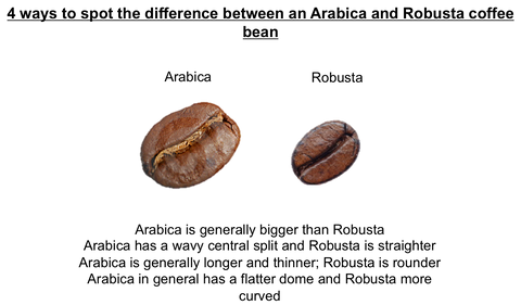 Arabica vs Robusta Coffee - Fresh Coffee Shop
