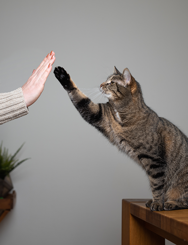 a Cat Give High Five
