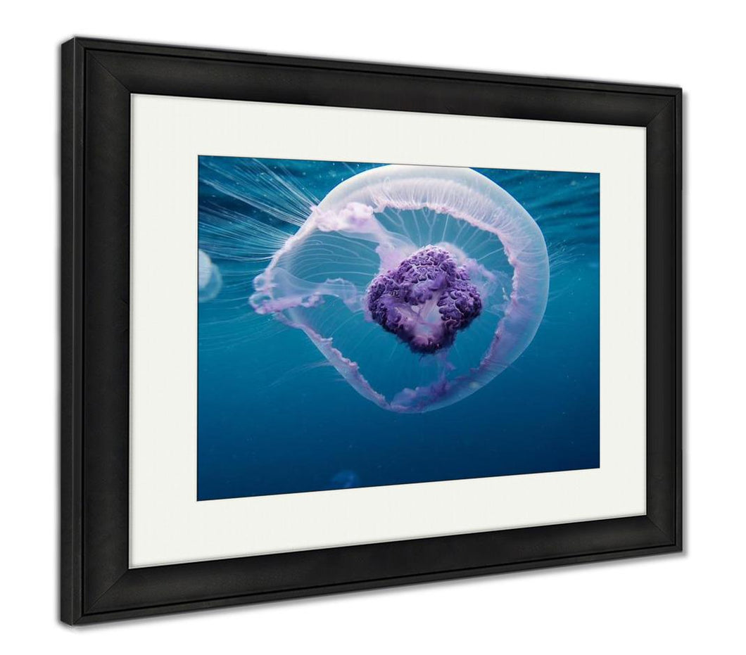 Framed Print, Nice Beautiful Small Jellyfish In Red Sea