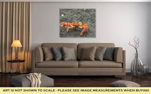 Gallery Wrapped Canvas, Red Cliff Crab Ecuador