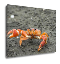 Load image into Gallery viewer, Gallery Wrapped Canvas, Red Cliff Crab Ecuador