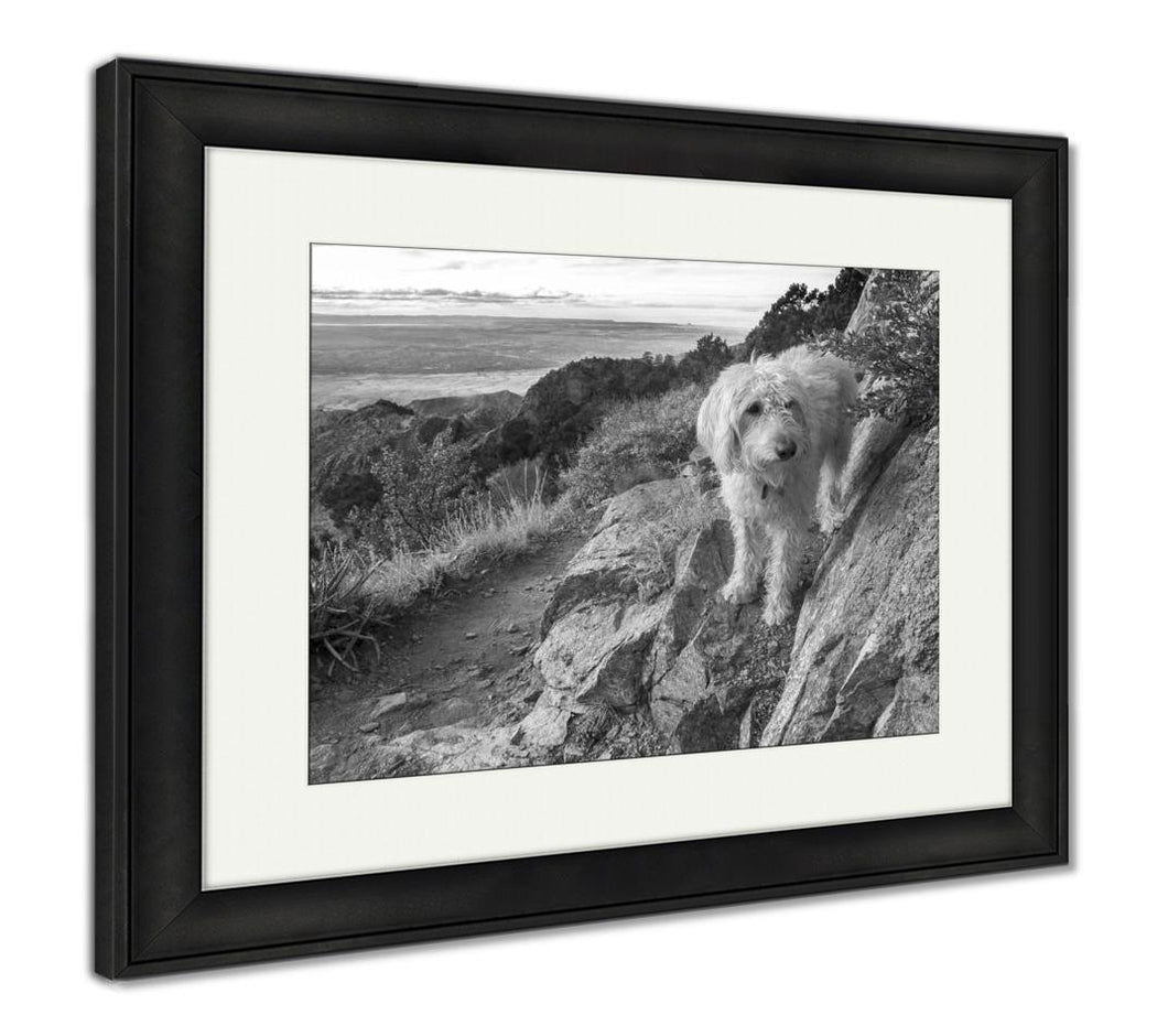 Framed Print, Labradoodle Above The Rio Grande Valley