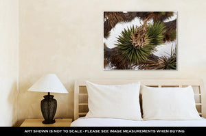 Gallery Wrapped Canvas, Dried Joshua Trees Flowers And Leaves