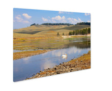 Load image into Gallery viewer, Metal Panel Print, Pelican Yellowstone USA