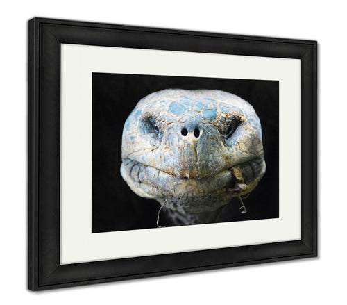Framed Print, Lonesome George Giant Tortoise Galapagos
