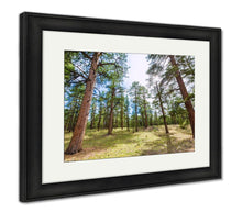 Load image into Gallery viewer, Framed Print, Pine Tree Forest In Grand Canyon Arizona