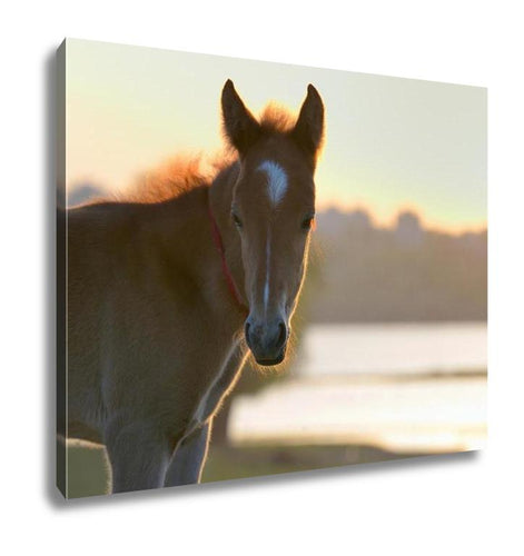 Gallery Wrapped Canvas, New Young Foal On Field At Sunset