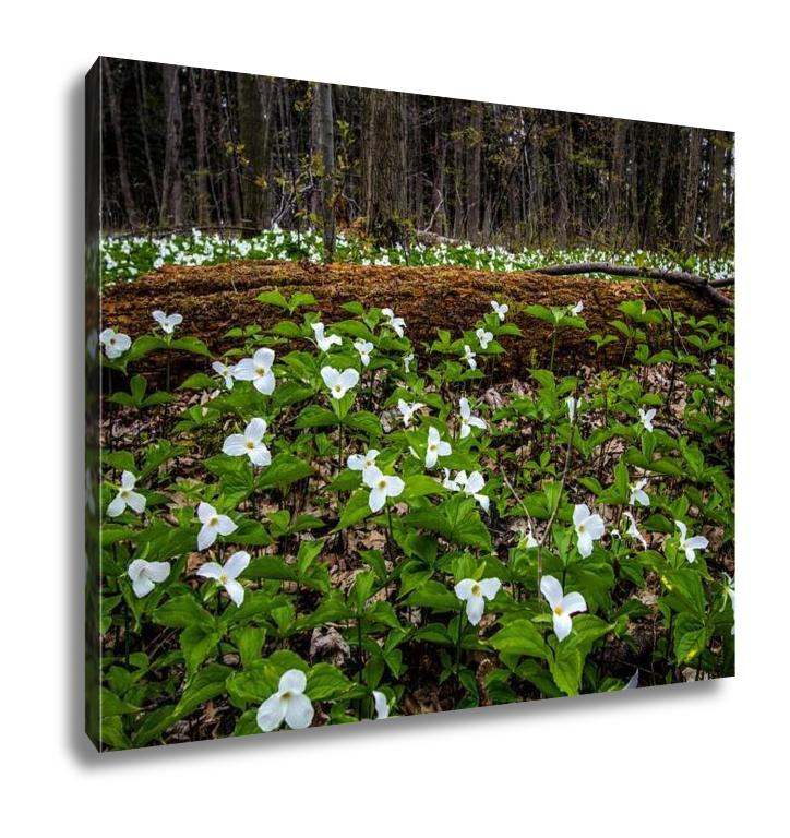 Gallery Wrapped Canvas, Moss Covered Log And Wild White Trillium Fallen Log Surrounded By Wild White