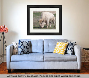 Framed Print, White American Bison
