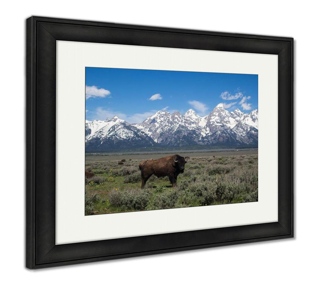 Framed Print, Large Buffalo At Grand Teton National Park