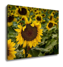 Load image into Gallery viewer, Gallery Wrapped Canvas, Large Yellow Sunflowers At Sunset