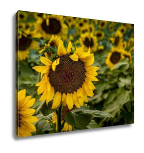 Gallery Wrapped Canvas, Large Yellow Sunflowers At Sunset