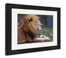 Load image into Gallery viewer, Framed Print, African Male Lion