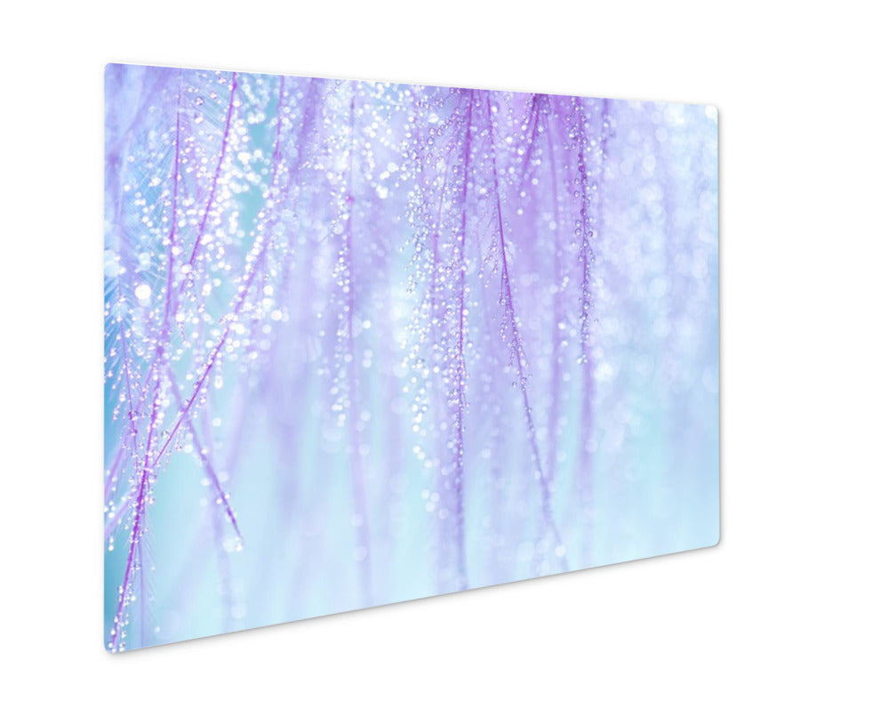 Metal Panel Print, Purple Feathers With Small Drops Of Water On A Blue Very Gentle And Beautiful