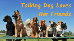 Talking Dog Named Bunny Loves Her Friends, Talks About Them With Recordable Buttons For Dogs