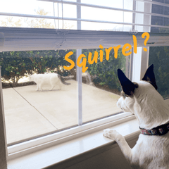 Talking Dog Obsessed With Neighbor's Cat, Calls Them A Squirrel