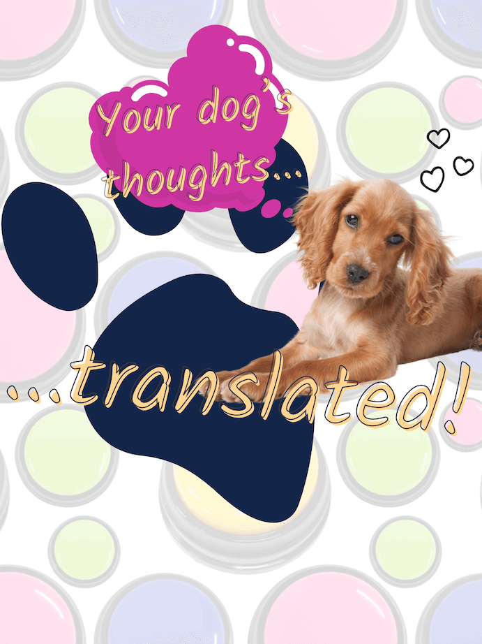 Recordable buttons for dogs are the closest thing to a dog translation device.
