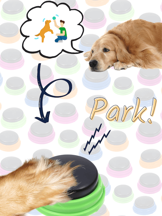 Dog asks for walk with buttons to the park