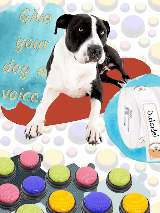 Give your dog a voice: a good boy with his dog communication button pad.