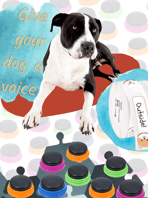 Give your dog a voice with recordable communication buttons