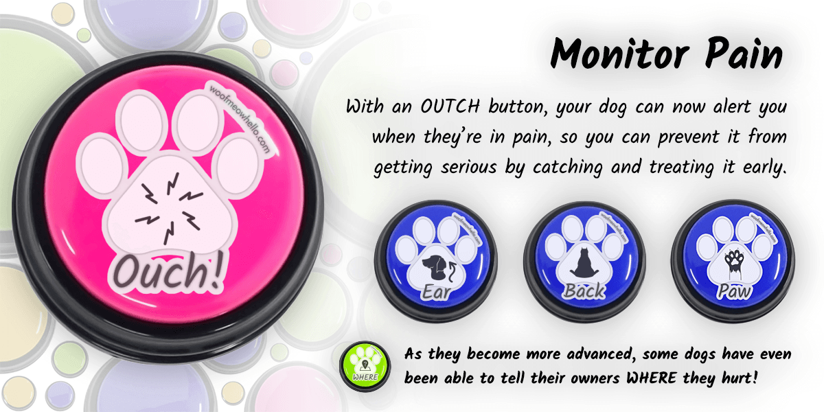 One of the best uses for recordable buttons for dogs is pain monitoring. With an ouch button, your dog can now alert you when they're in pain, so you can prevent it from getting serious by catching and treating it early. As they become more advanced, some dogs have even been able to tell their owners where they hurt! Here you can see dog talk buttons for ear, back, and paw.