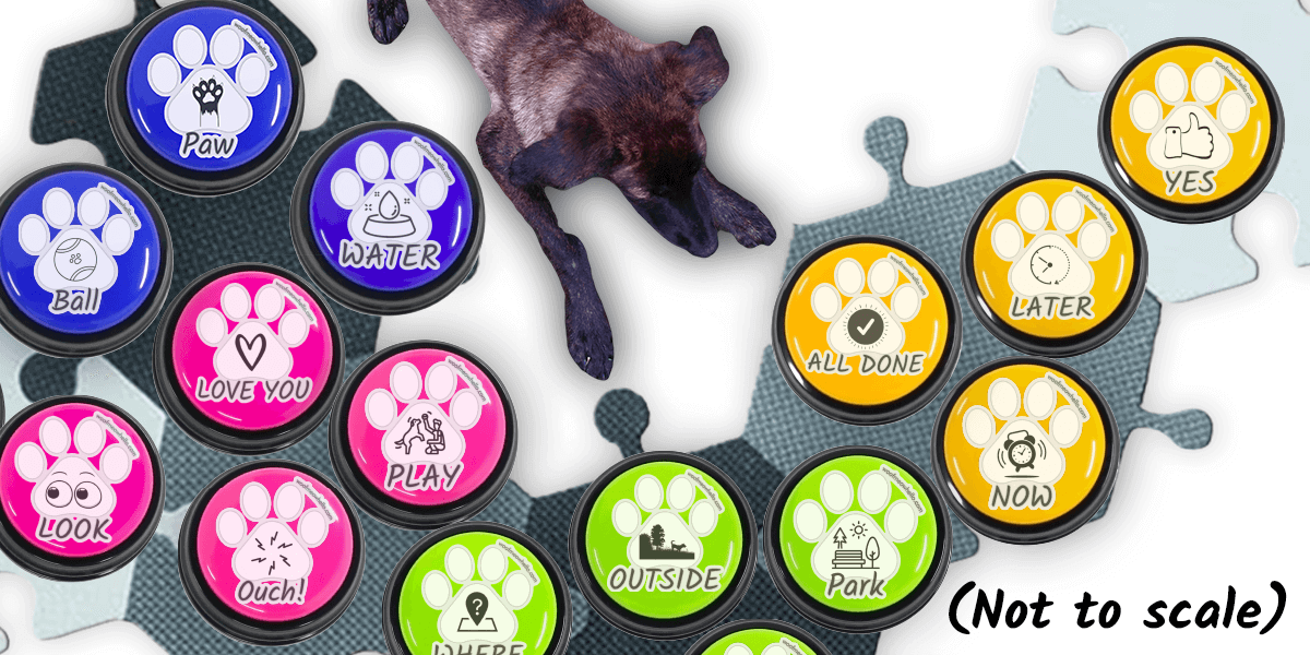 Dog button board with speech buttons. How to teach your dog to say I love you, play, all done, outside, and more.