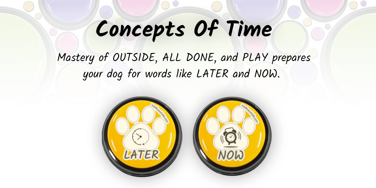 Concepts of time: Master of outside, all done, and play prepares your dog for words like later and now. Here there are two yellow dog communication buttons with stickers for later and now.