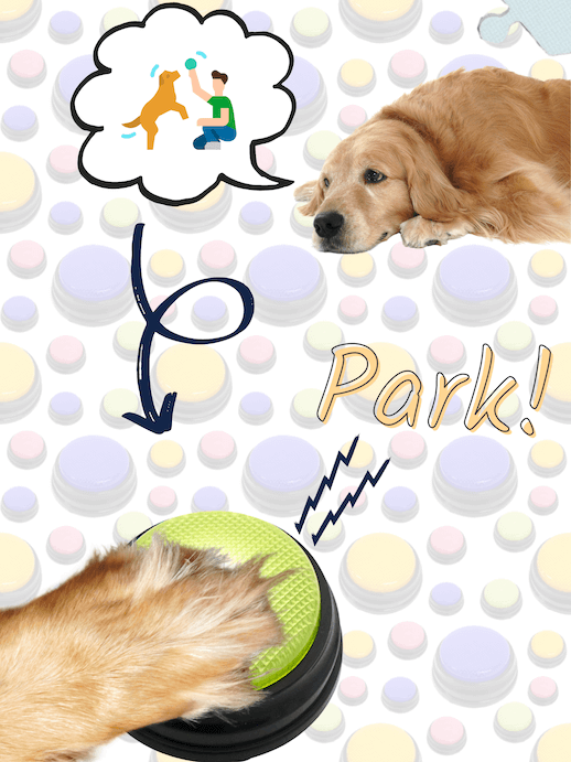 Dog uses recordable buttons for dogs to ask to go to the park.