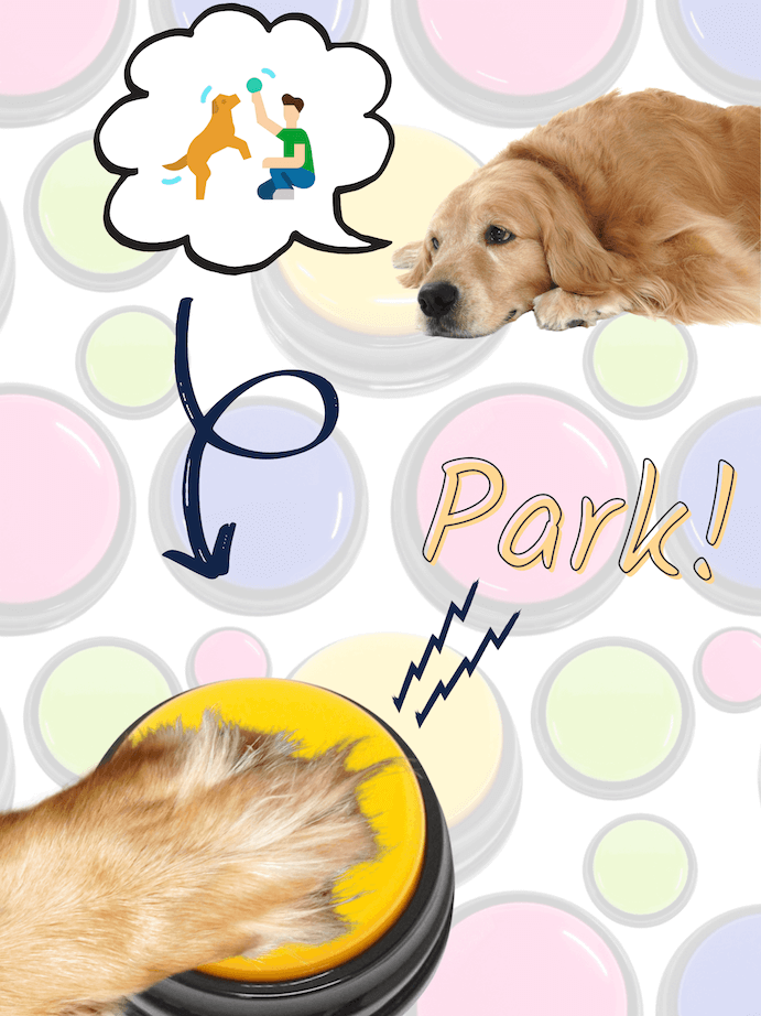 Dog asks to go to the park with recordable button for dogs.