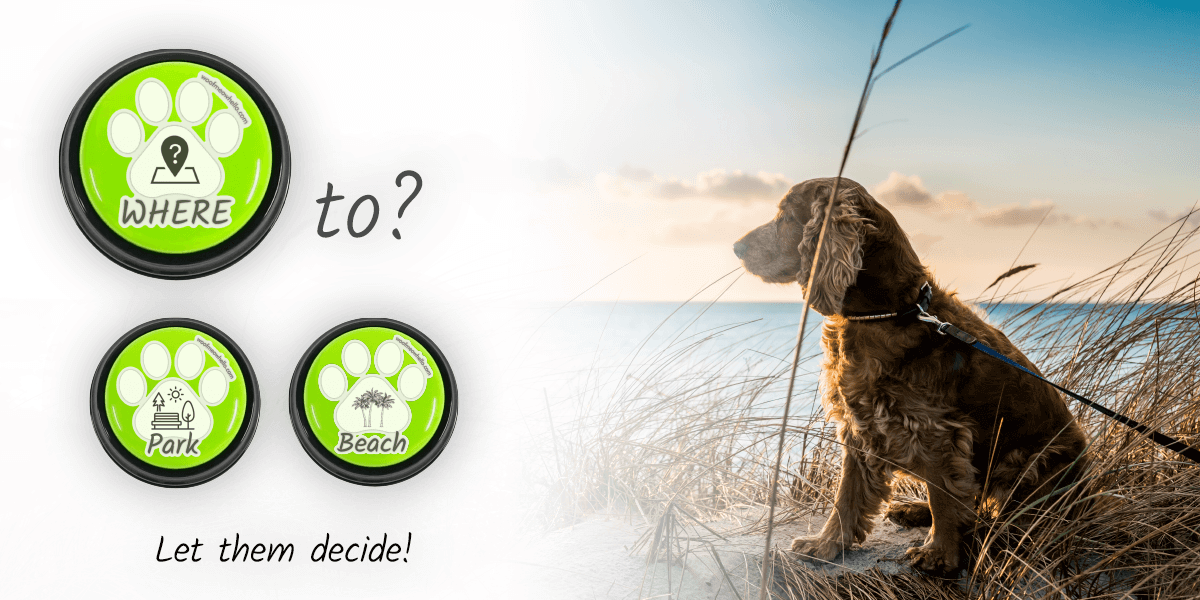 Where to? Let them decide! Dedicate buttons to your dog's favorite indoor and outdoor locations.