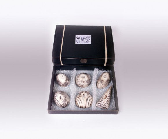 Boxed Set Dip Shells